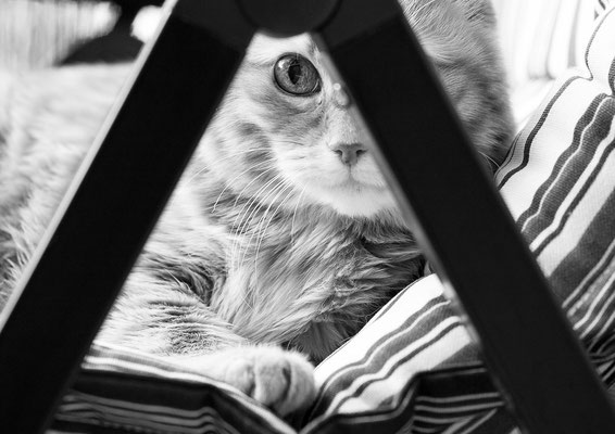 © Claudia Kruszka