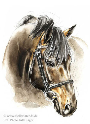 Warmblut Hengst in Aquarell.