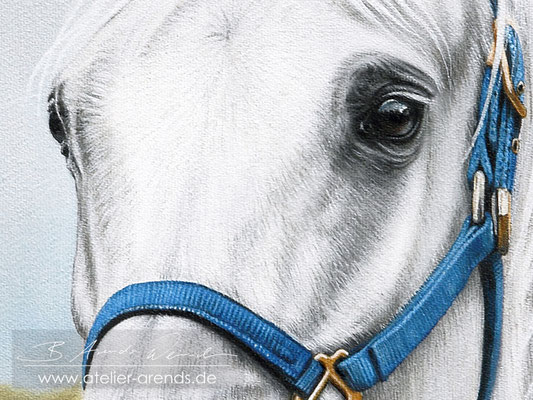 Details des Pferdeportraits.