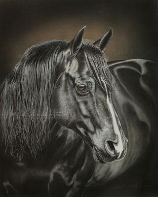 Auftragsmalerei Quarter Hengst Black Panther in Pastell, Format 40 x 50 cm. Fotovorlage ©: Tristan Dark Horses