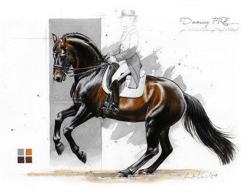 Damsey FRH, gemalt in Aquarell. Format 30 x 40 cm. Fotovorlage: © B. Arends-Weinrich