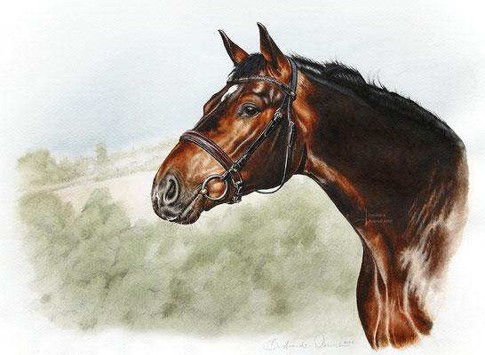Pferdeportrait nach Fotovorlage gemalt in Aquarell, Fromat 30 x 40cm. © B. Arends-Weinrich