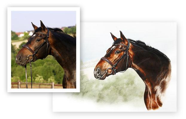 Pferdeporrtrait und Fotovorlage im Vergleich. Fotovorlage © B. Arends-Weinrich