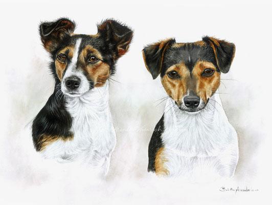 Jack Russell Terrier gemalt in Aquarell. Auftragsarbeit, Format 30 x 40 cm.