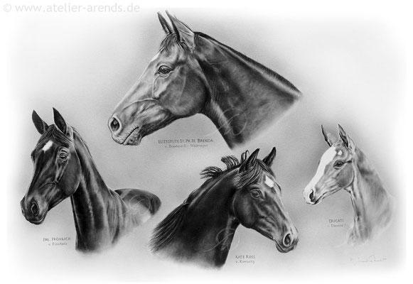 Pferdeportraits gemalt nach Fotovorlage in Bleistift. Auftragsarbeit, Format 50 x 70 cm.