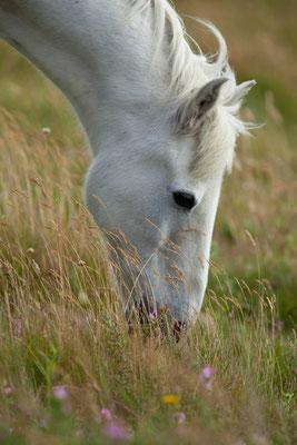 Tierfotograf Pferde Neuss