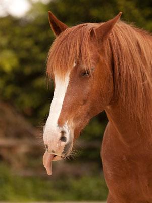 Tierfotograf Pferde