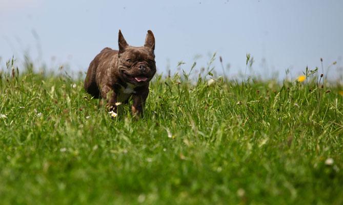 Hundeshooting Neuss
