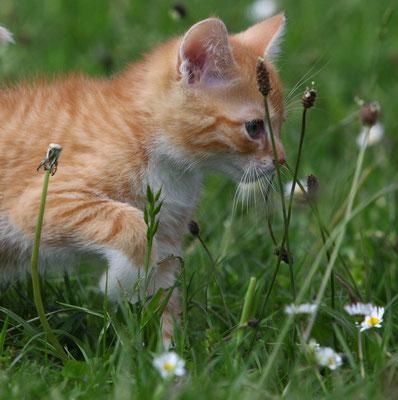 Katzenshooting Neuss