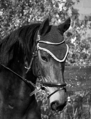 Pferdeshooting Neuss