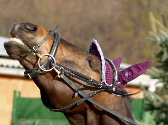 Pferdeshooting Grevenbroich