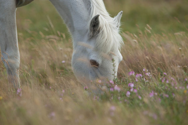 Pferdefotos Grevenbroich