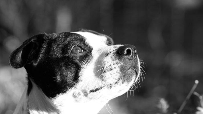 Hundeshooting Aachen