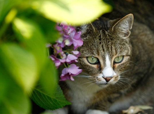 Katzenfotograf
