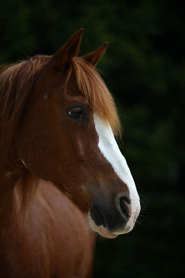 Pferdefotos Mönchengladbach