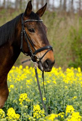Tiershooting Pferde Grevenbroich