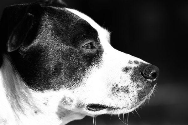 Hundefotos Aachen