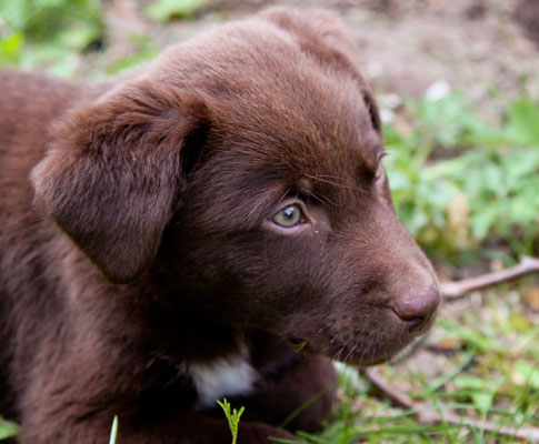 Hundefotograf Neuss