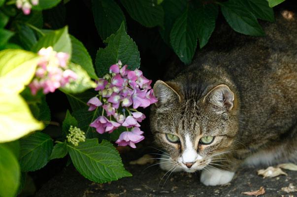 Katzenshooting Grevenbroich