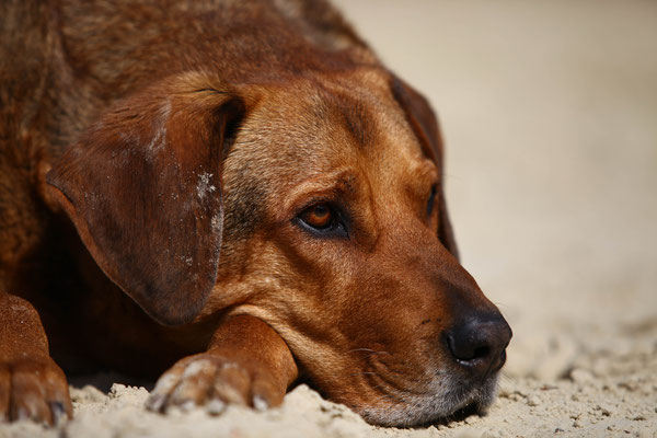 Hundefotograf Grevenbroich