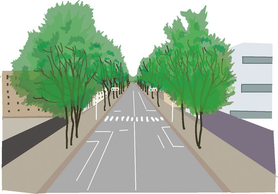 植物 自然 緑 庭園 公園 ケヤキ並木 街路樹