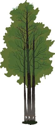 植物 自然 緑 庭園 公園 三本杉