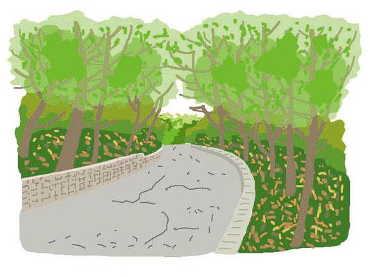植物 自然 緑 庭園 公園 緑道 遊歩道