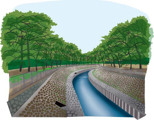 植物 自然 緑 庭園 公園 善福寺川
