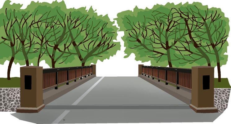 植物 自然 緑 庭園 公園 善福寺緑地 相生橋