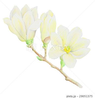 春のイラスト素材 堀 ようこ ポートフォリオサイト Ptimo