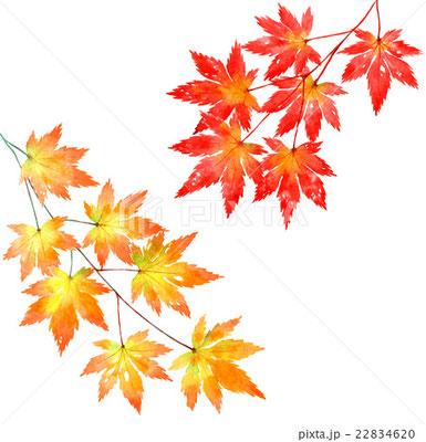 9月 11月のイラスト素材 堀 ようこ ポートフォリオサイト Ptimo