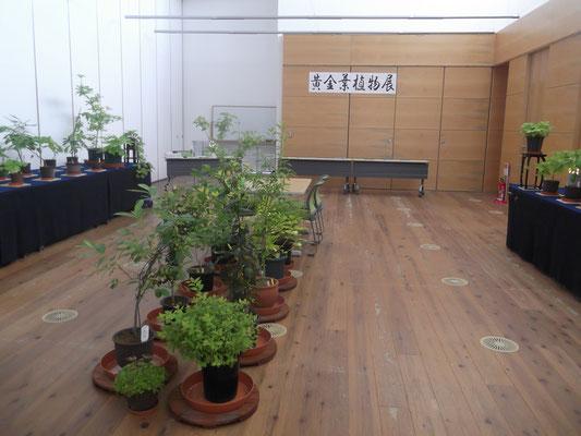 いくとぴあ食花黄金葉展示2018.5.28