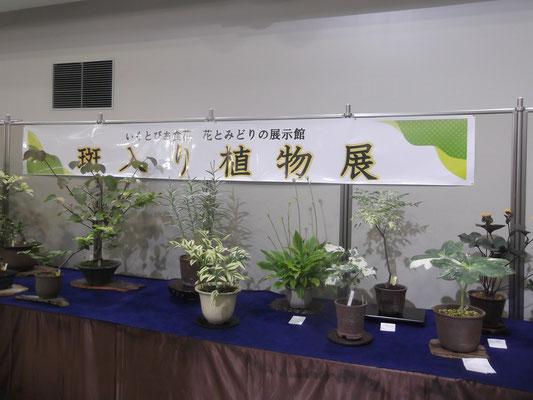 いくとぴあ食花2017.7月(合同出展)