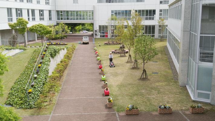 新潟薬科大学緑地管理(芝刈)作業