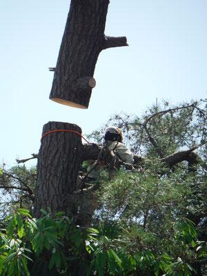 支障となった樹木の伐採