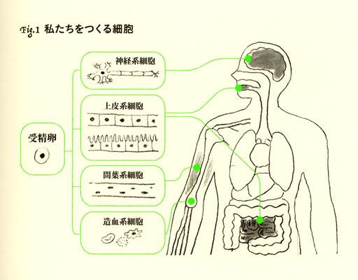 『がんと正しく戦うための遺伝子検査と精密医療』(羊土社)挿絵