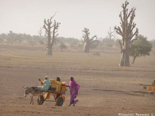 Femmes mauritanniennes - Mauritanie