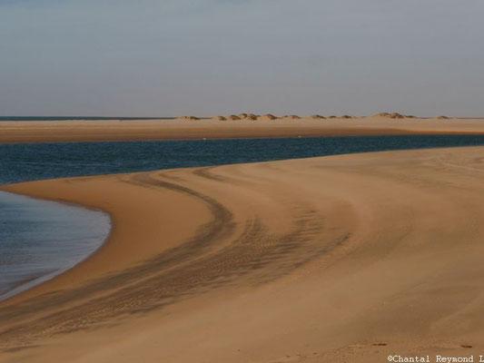 Le Banc d'Arguin - Mauritanie