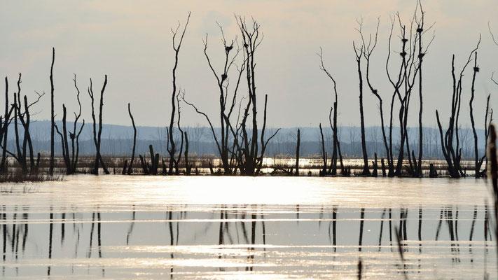 Moorwiesen Kummerower See