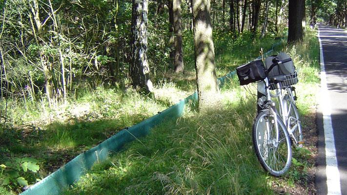 """Der Radweg ist Teil des sogennaten """"Froschradwegs"""". An manchen Stellen findet man kleine Zäune, die verhindern sollen, dass die kleinen grünen Hüpfer vor die Autos geraten."""