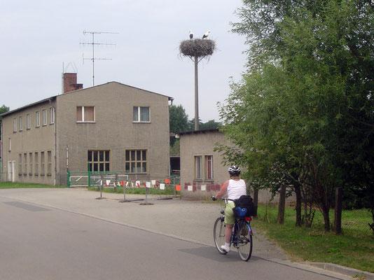 Nun geht es wieder auf den Elberadweg. Unterwegs sehen wir immer wieder Storchennester.