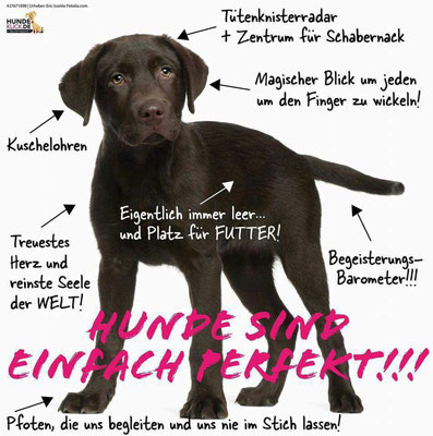 Online Welpenseminar (c) Hundeschule gooddog