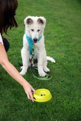 Welpenschule © Hundeschule gooddog