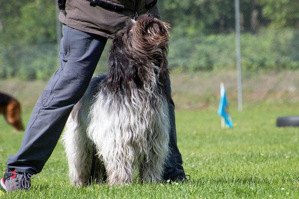 SpassSport (c) Hundeschule gooddog