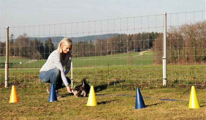 Zwergligruppe/Zwerghunde © Hundeschule gooddog