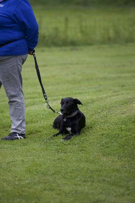 Mentaltraining für Hundehalter/innen (c) Hundeschule gooddog
