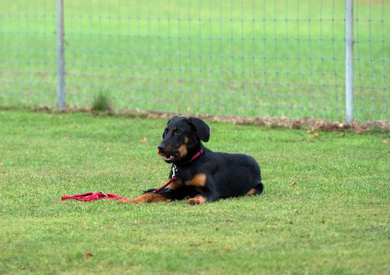 Erziehungskurs © Hundeschule gooddog