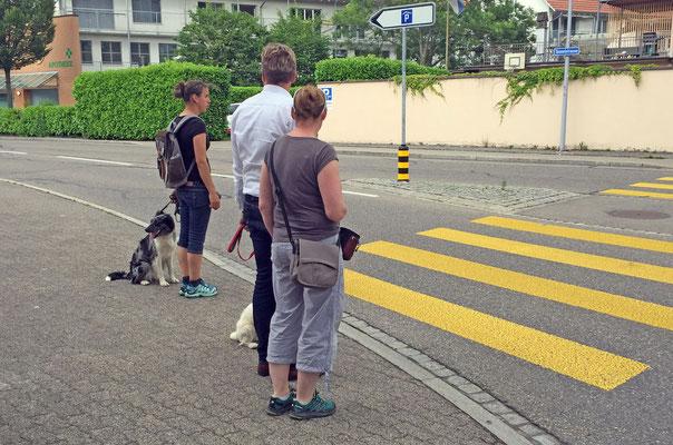 Junghundekurs/Stadttraining © Hundeschule gooddog