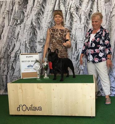 Minna gewinnt die Puppy Klasse