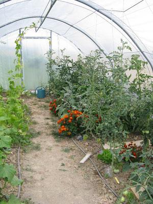 plantations dans la serre aux Gites des Camparros à Nailloux